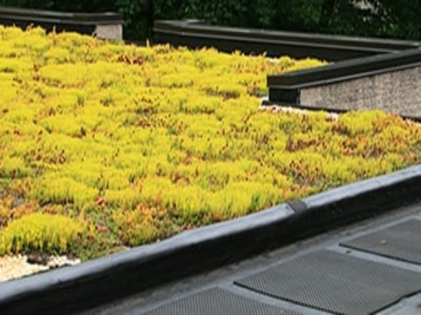 Rubber roof system for green roofs